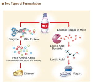 two types of fermentation