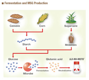 fermentation and msg production