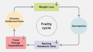 Frailty Cycle
